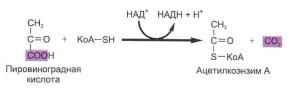 Отщепление  молекулы углекислого газа от молекулы пировиноградной кислоты.