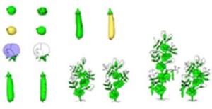 Мендель использовал горох с различными качественными признаками