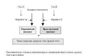 Основы комплементарного взаимодействия