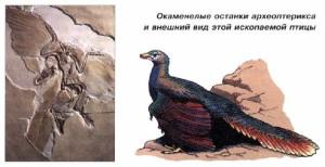 Останки археоптерикса и его внешний вид.