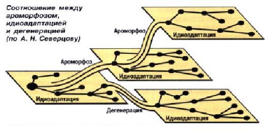 Основные направления эволюции