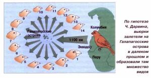 Множество видов вьюрков по версии Дарвина