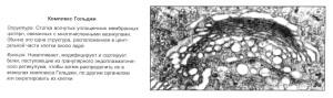 Клетка под электронным микроскопом