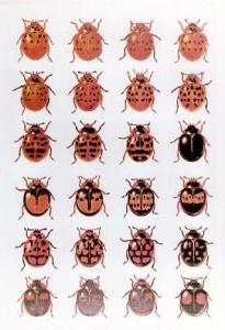 Пример изменчивости у насекомых