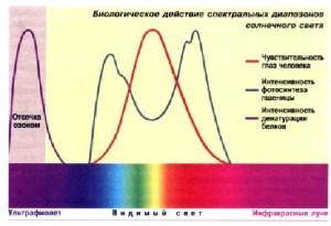 Действие спектральных диапазонов солнечного света