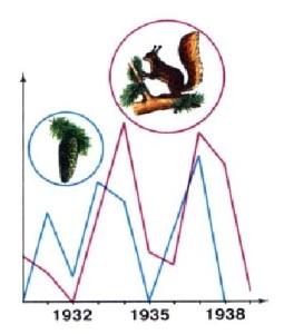 Колебания численности белок