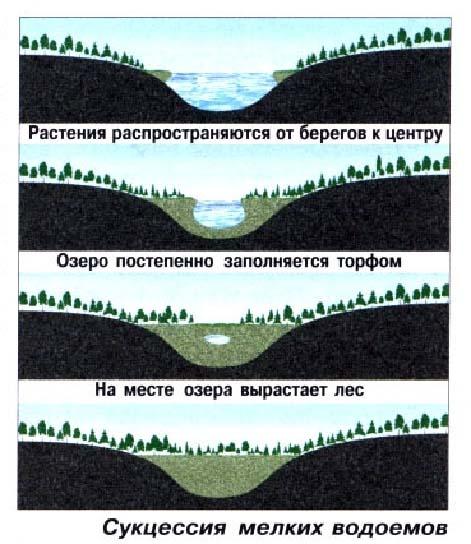 Биогеоценоз