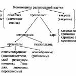 Основные различия растений и животных