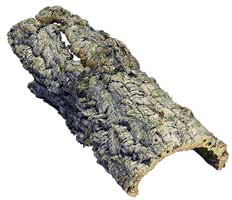 Покровная ткань растений - корка
