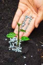 Удобрения - вот, что нужно для развития растений