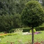 Ветвление растений