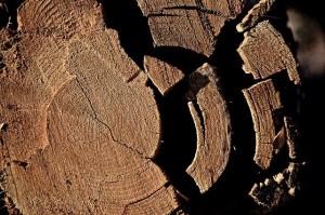 Анатомия стебля