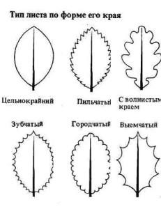 Тип листа по форме края
