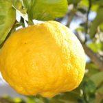 Плод растения